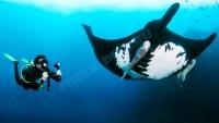 Sealife Sea Dragon 2500 фото/видео свет 3